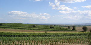 Austrian vineyards and plains of Central Europe
